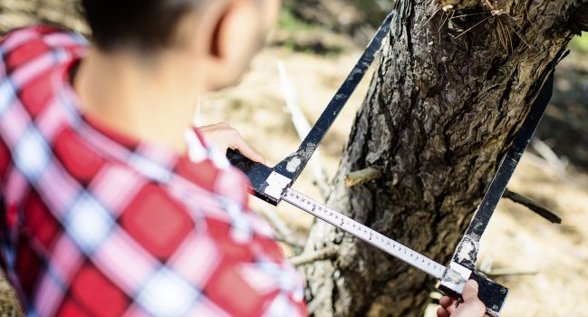 What is Forest Biometrics?